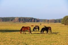 blick-auf-pferde-koppel-herbst-goehren-lebbin