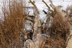 holz-am-fleesensee-winter
